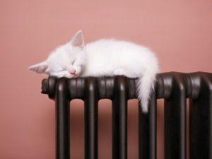 Белый котёнок спит на чугунной батареи